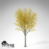 xfrogplants autumn sycamore maple 3d model