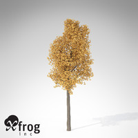 xfrogplants autumn ginkgo 3d ma