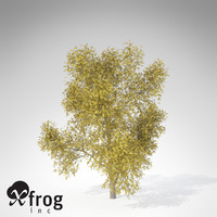 3ds max xfrogplants autumn honey locust