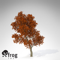 XfrogPlants Autumn Red Oak