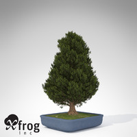 3d xfrogplants bonsai hinoki falsecypress