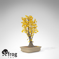 3d xfrogplants bonsai ginkgo model