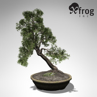 3ds max xfrogplants bonsai temple juniper