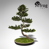 3d model xfrogplants bonsai scotch pine