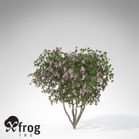 xfrogplants blossoming crape myrtle 3d model