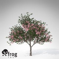 XfrogPlants Blossoming Oleander