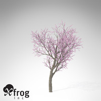 3d xfrogplants blossoming peach tree model