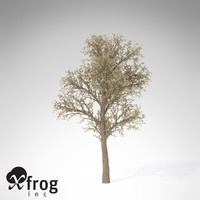 3d xfrogplants blossoming pear tree