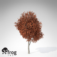 c4d xfrogplants autumn silver maple