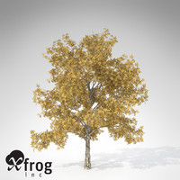 XfrogPlants Autumn European Walnut