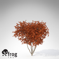 3d model xfrogplants autumn crape myrtle