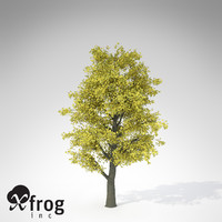 xfrogplants autumn littleleaf linden 3d 3ds