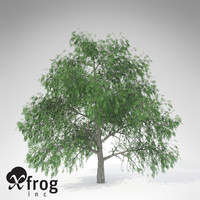 3d model xfrogplants pecan tree