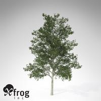 c4d xfrogplants shagbark hickory tree