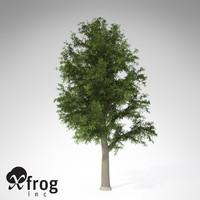 XfrogPlants European Beech