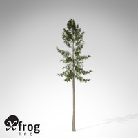 XfrogPlants Norway Spruce