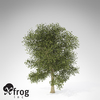 maya xfrogplants london planetree x
