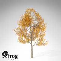 3ds max xfrogplants sassafras tree