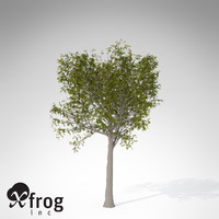 3d model xfrogplants european mountain ash