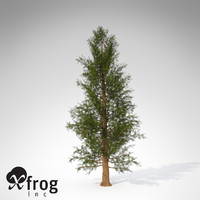 3d xfrogplants western red cedar model