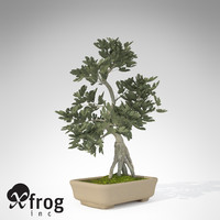 XfrogPlants Bonsai Fig Tree
