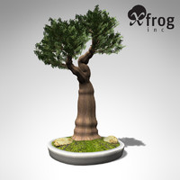 3d xfrogplants bonsai western juniper model