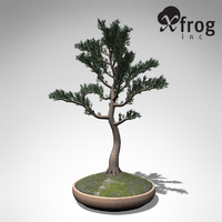 xfrogplants bonsai white spruce 3d 3ds