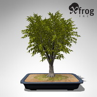 3d model xfrogplants bonsai japanese zelkova