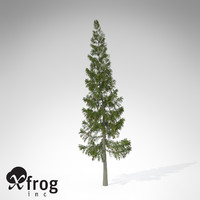 XfrogPlants Grand Fir
