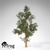 xfrogplants western juniper tree 3ds