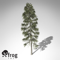 XfrogPlants Black Spruce
