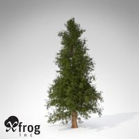 XfrogPlants Western Red Cedar CL