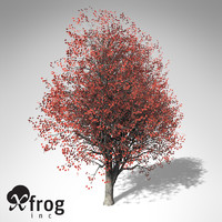 3d xfrogplants red maple tree