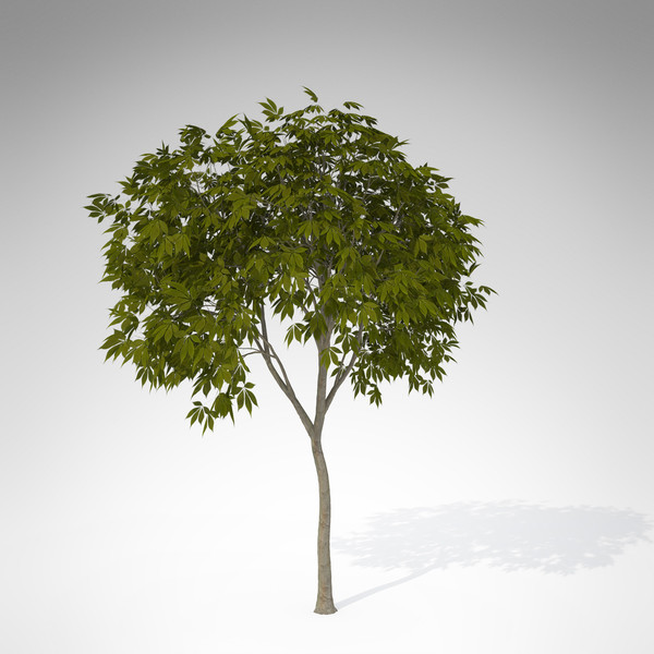 xfrogplants ohio buckeye tree 3d max - XfrogPlants Ohio Buckeye... by xfrog