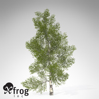 3d model xfrogplants paper birch tree