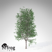 3d model xfrogplants kentucky coffeetree tree