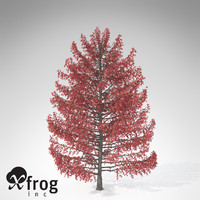 XfrogPlants Sweet Gum