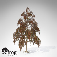 xfrogplants bald cypress tree 3ds