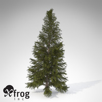 3d model xfrogplants eastern hemlock tree