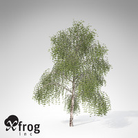XfrogPlants Silver Birch