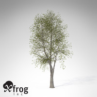 3d model xfrogplants sweet chestnut tree