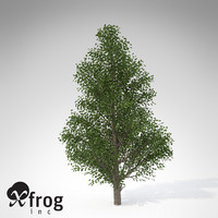 max xfrogplants holly tree