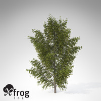 3ds max xfrogplants alpine laburnum tree