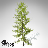 XfrogPlants European Larch