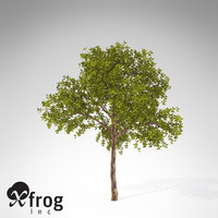 xfrogplants medlar tree shrub x