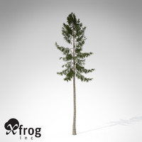 XfrogPlants Norway Spruce EU