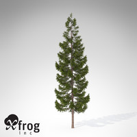3d xfrogplants oriental spruce tree model