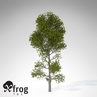 xfrogplants pyrenean oak tree obj