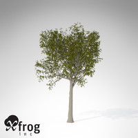 XfrogPlants European Mountain Ash EU