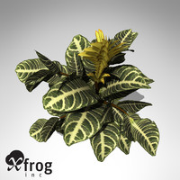 xfrogplants zebra plant 3d model